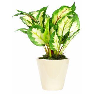 Artificial Green Color Diffenbachia Bonsai Tree (102)