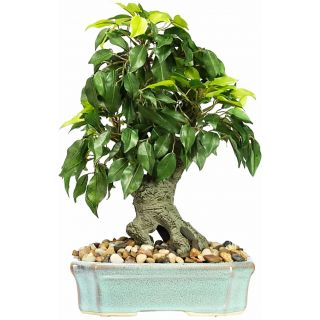 Artificial Green Color Ficus Bonsai Tree (101)